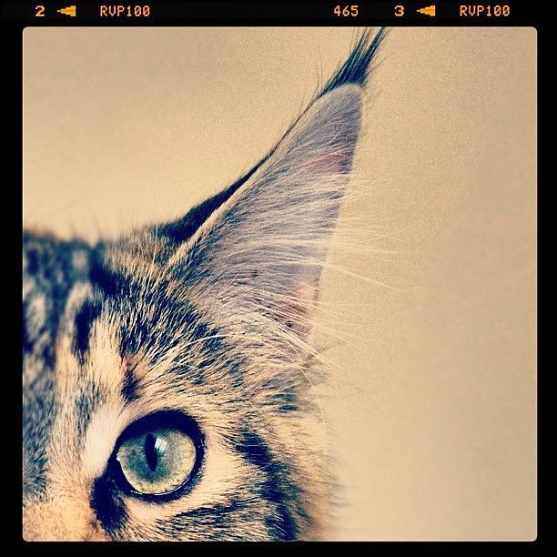 Cute Photograph - #cat #animal #cute #adorable #kitten by Jill Battaglia