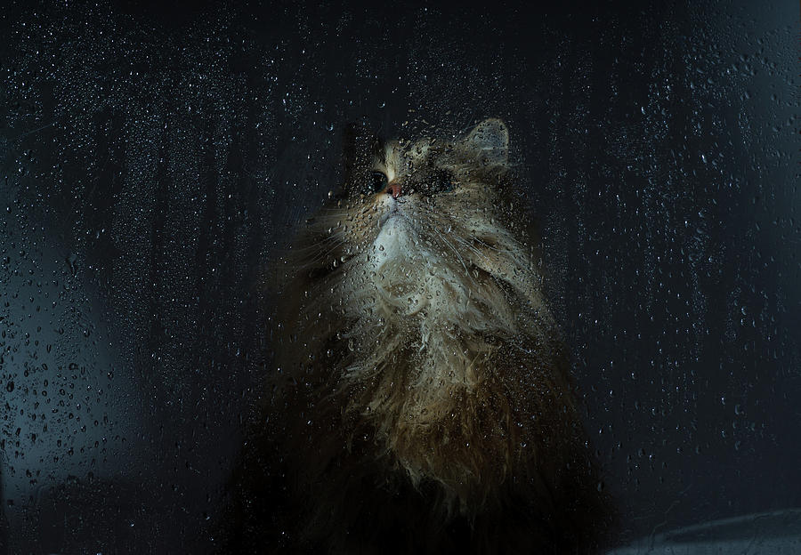 Cat By Rainy Window Photograph by Benjamin Torode