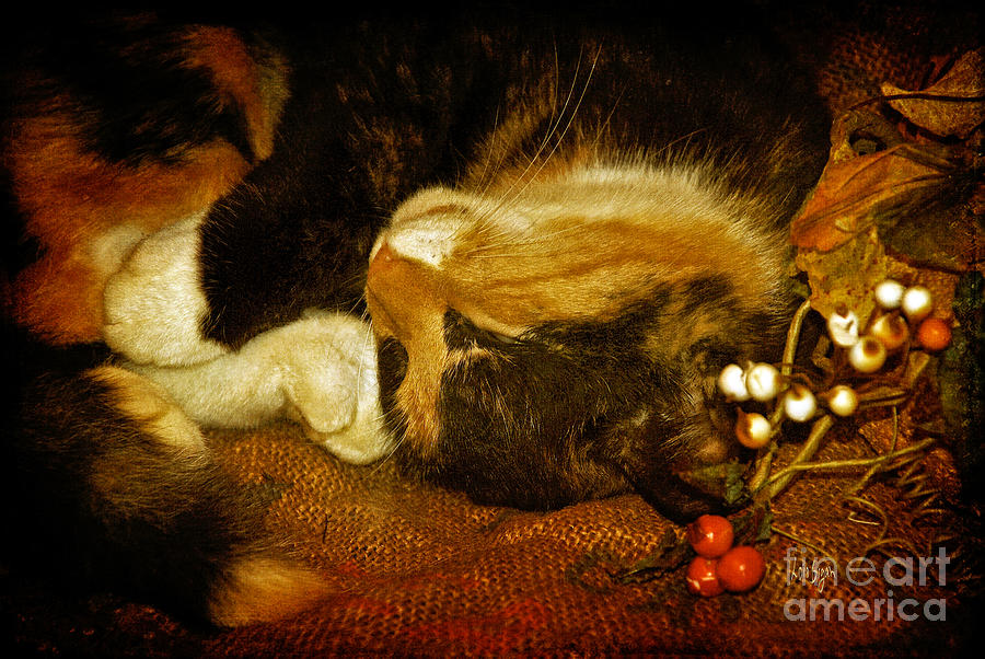 Cat Photograph - Cat Catnapping by Lois Bryan