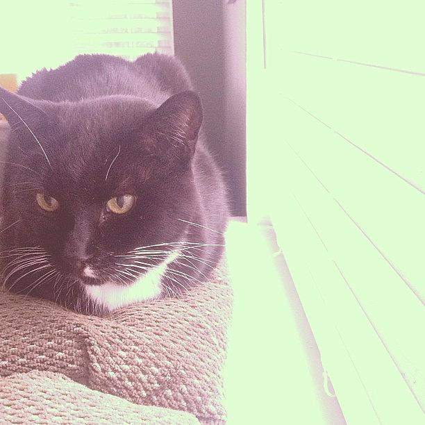 Animal Photograph - #cat #cats #tagsforlikes #catsagram by Cody The Cat