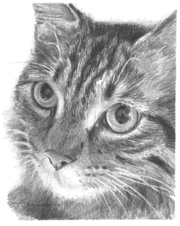 Cat Closeup Pencil Portrait Drawing by Mike Theuer