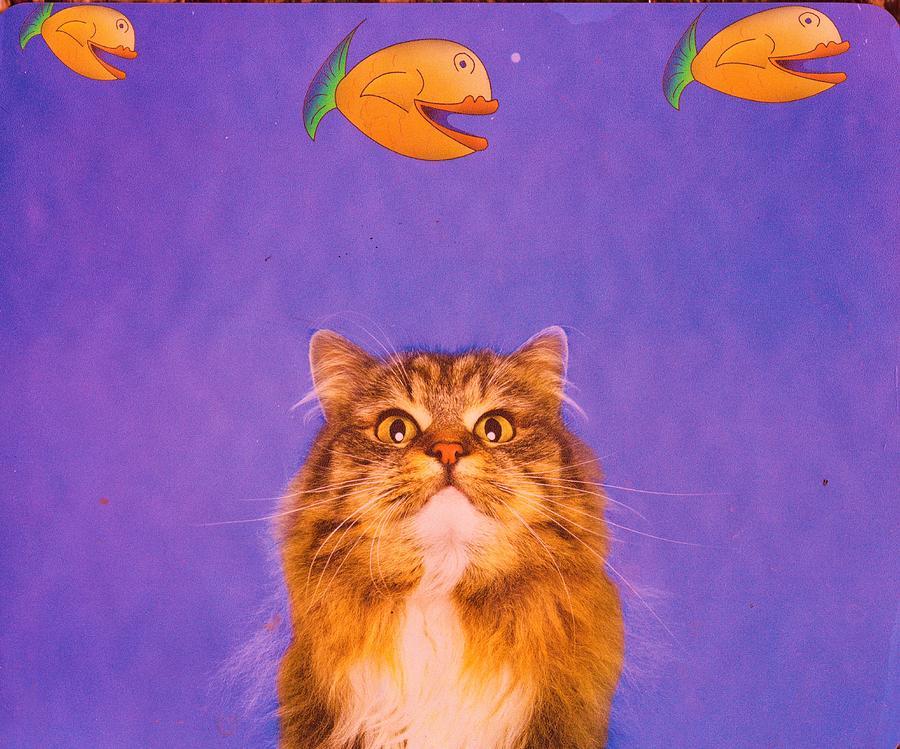 Cat Mixed Media - Cat Dreaming by Anne-Elizabeth Whiteway