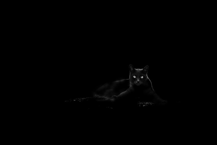 Black Photograph - Cat by Du?an Ljubi?i?