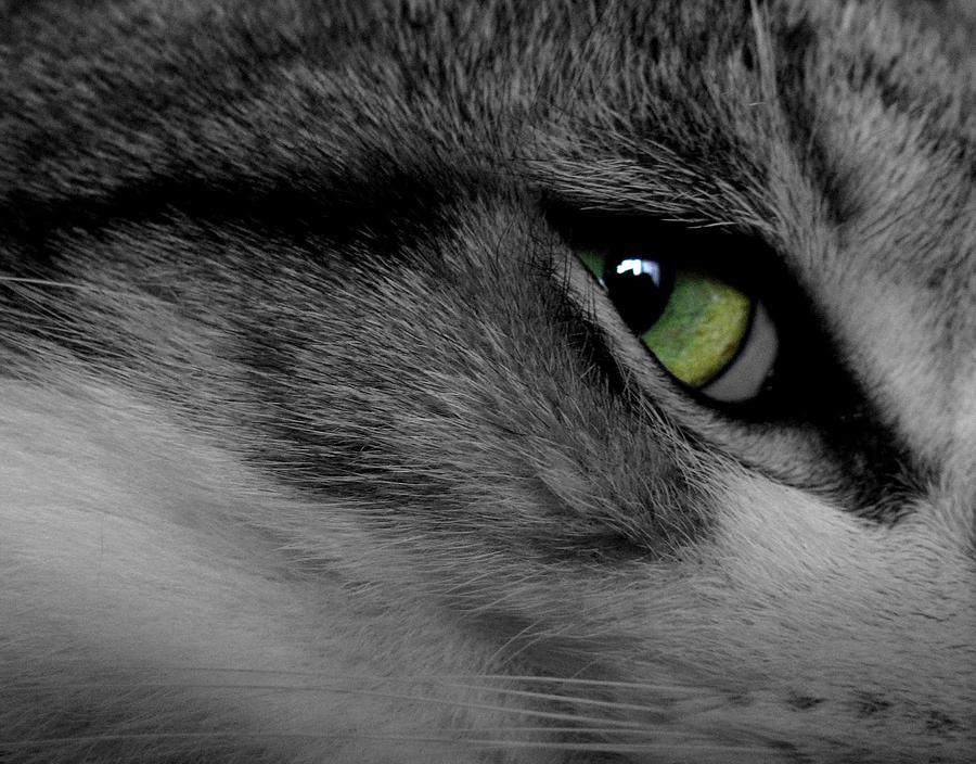 Sale Photograph - Cat Eye by AR Annahita