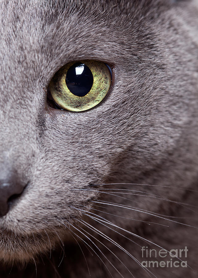 Cat Photograph - Cat Eye by Nailia Schwarz