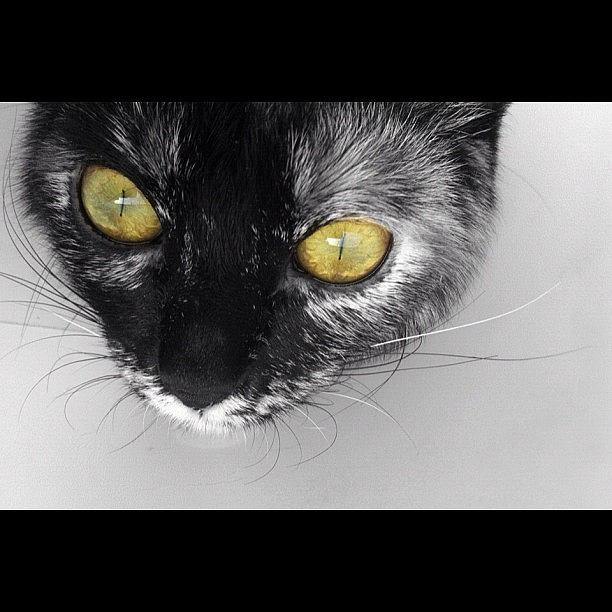 Eyes Photograph - Cat eyes like snake by Ana V