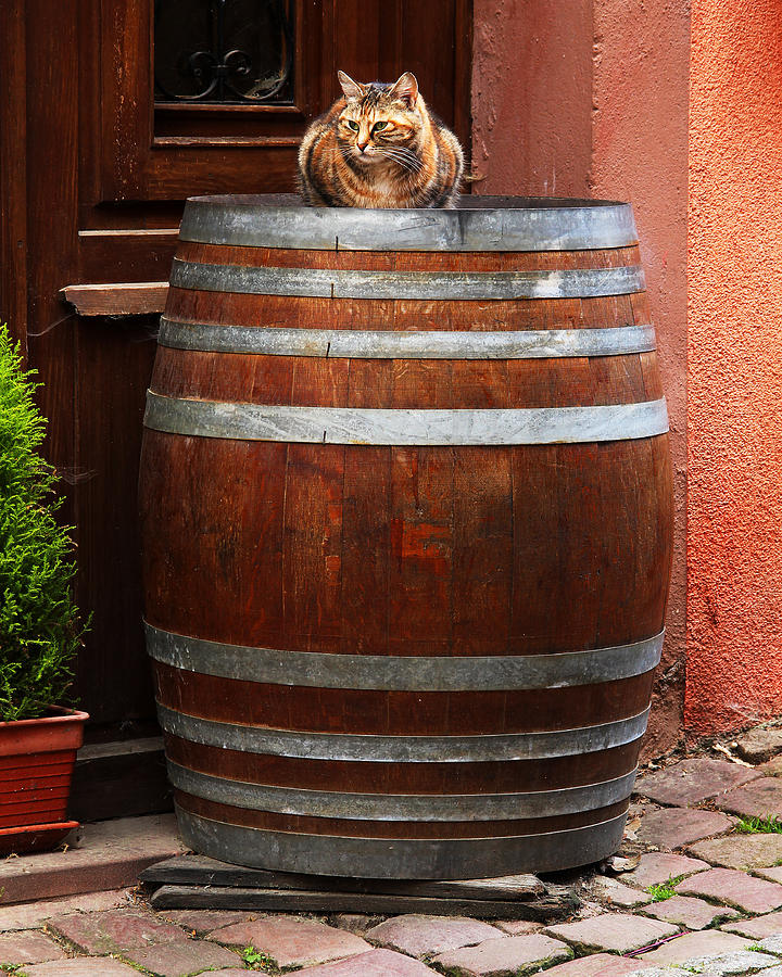 Cat Photograph - Cat Guarding A Wine Barrel In Alsace by Greg Matchick