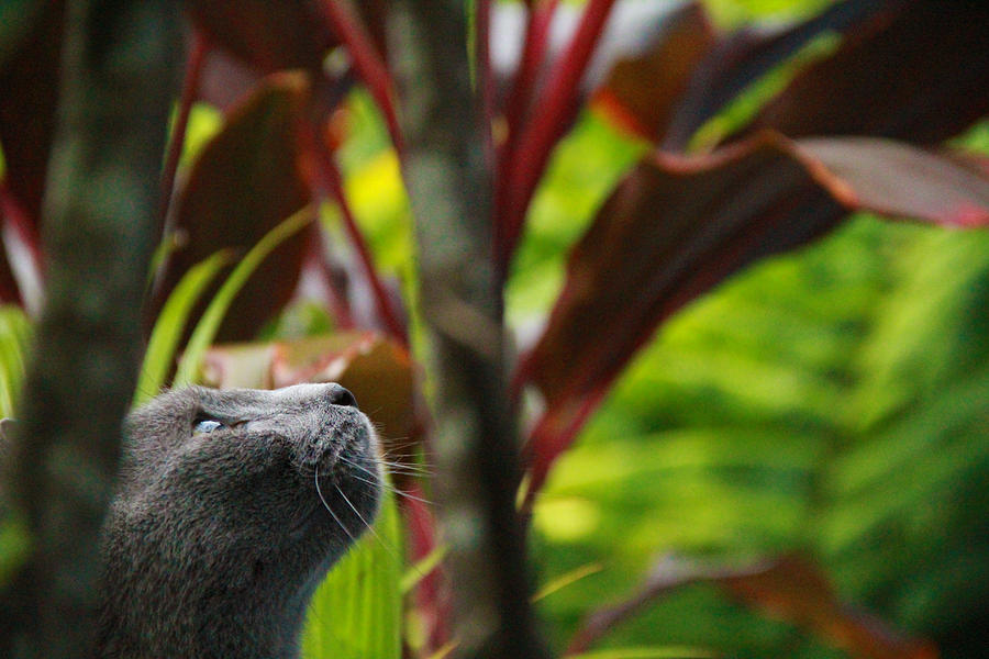 Concentration Photograph - Cat Hunting by Debbie Cundy