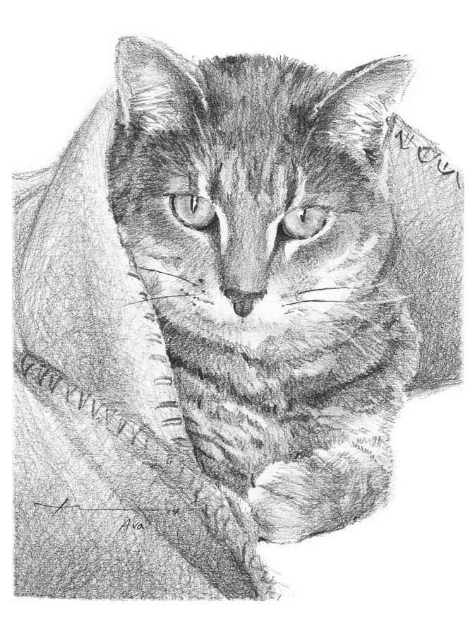 Cat In A Blanket Pencil Portrait  Drawing by Mike Theuer