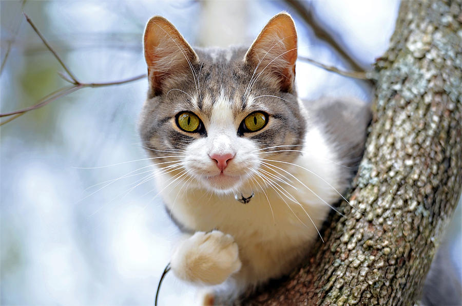 Cat Photograph - Cat In A Tree by Susan Leggett
