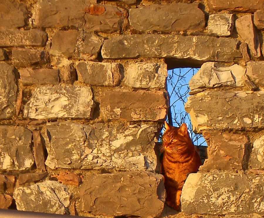Cat in the wall by Jim Barbour