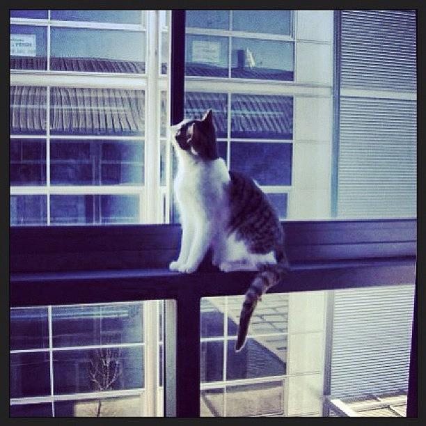 Instagram Photograph - Cat in the window by Ana V