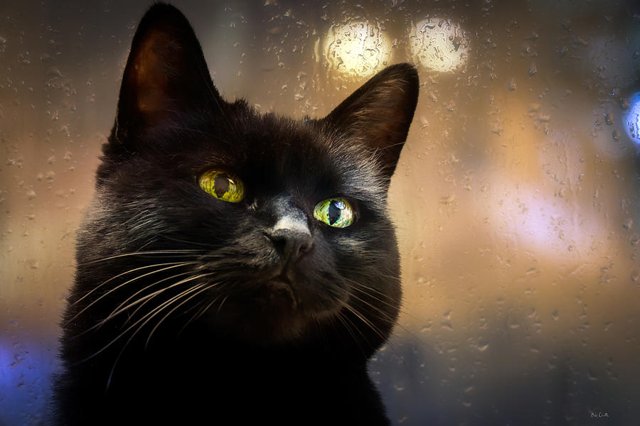 Cat Photograph - Cat In The Window by Bob Orsillo