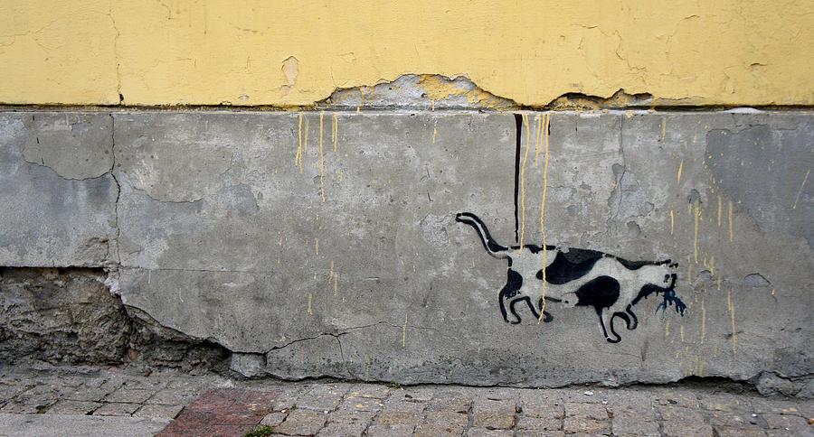 War Photograph - Cat by Kees Colijn