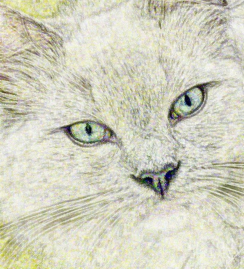 Gray Drawing - Cat - Mink Ragdoll - Smokey Blu by Donna E Pickelsimer
