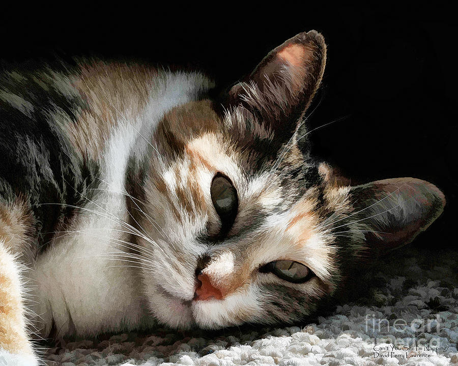 Cat Photograph - Cat Napping In The Sun By David Perry by David Perry Lawrence