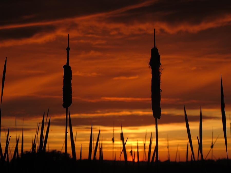 Bailey Island Photograph - Cat Nine Tails Sunset by Donnie Freeman
