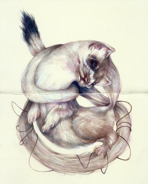 Fine Art Digital Art - cat by Noahlakcus