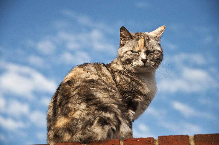 Cat Photograph - Cat On A Hot Brick Wall by Steve Purnell