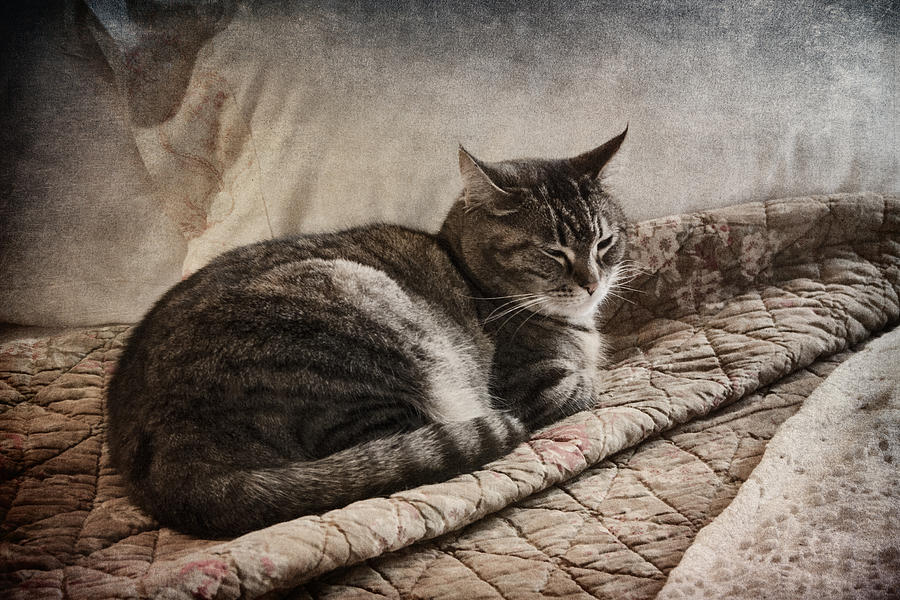 Cat Photograph - Cat On The Bed by Carol Leigh