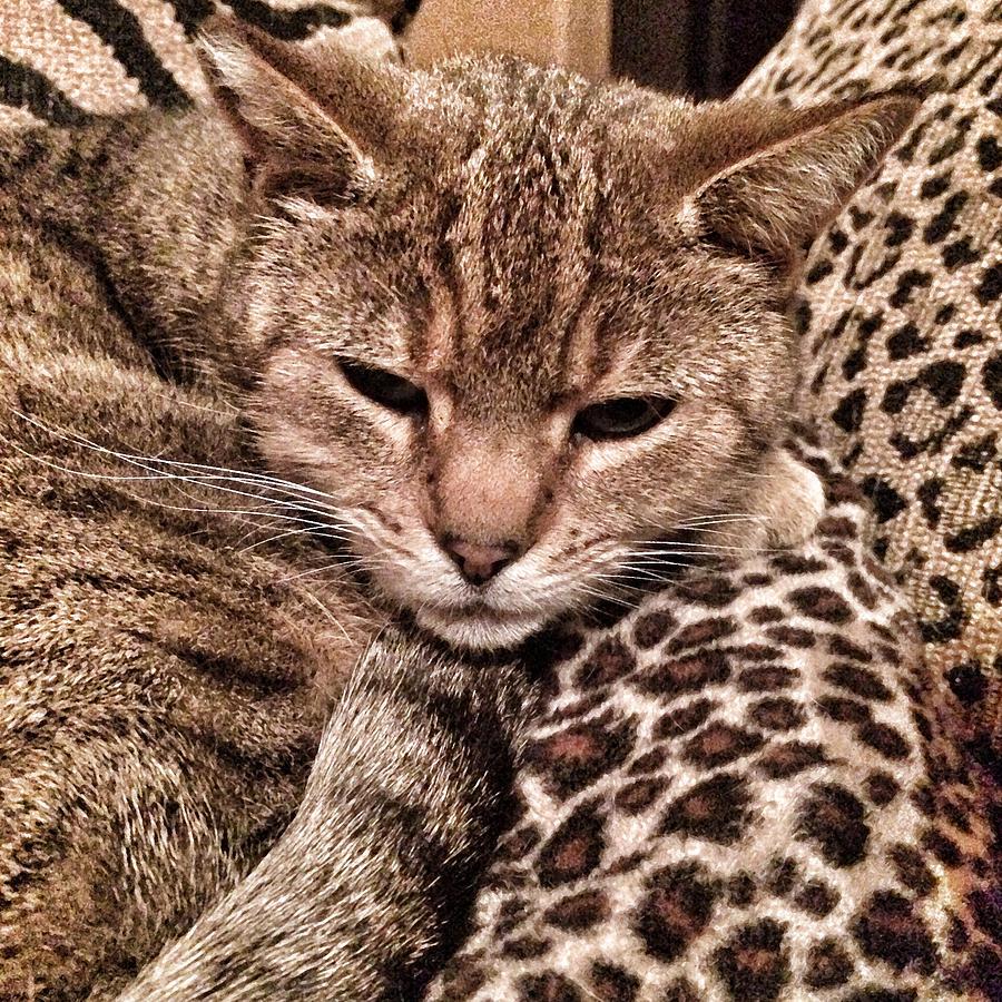 Cat Patterns Photograph