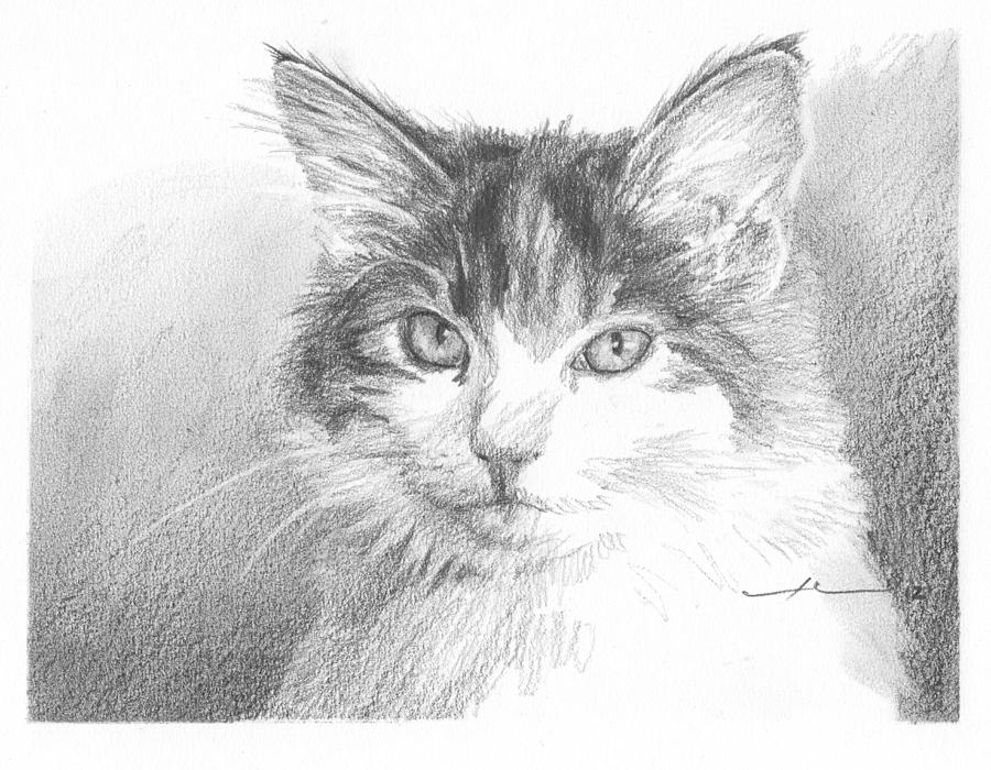 Cat Pencil Portrait Drawing by Mike Theuer