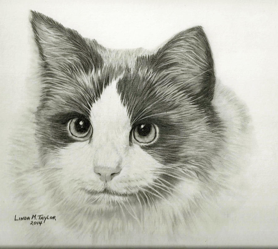 Pencil portrait drawing cat portrait custom graphite pencil drawing by linda taylor
