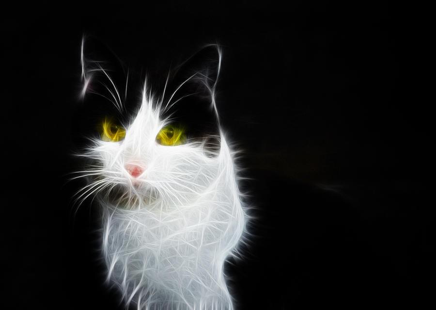 Cat Portrait Fractal Artwork Photograph