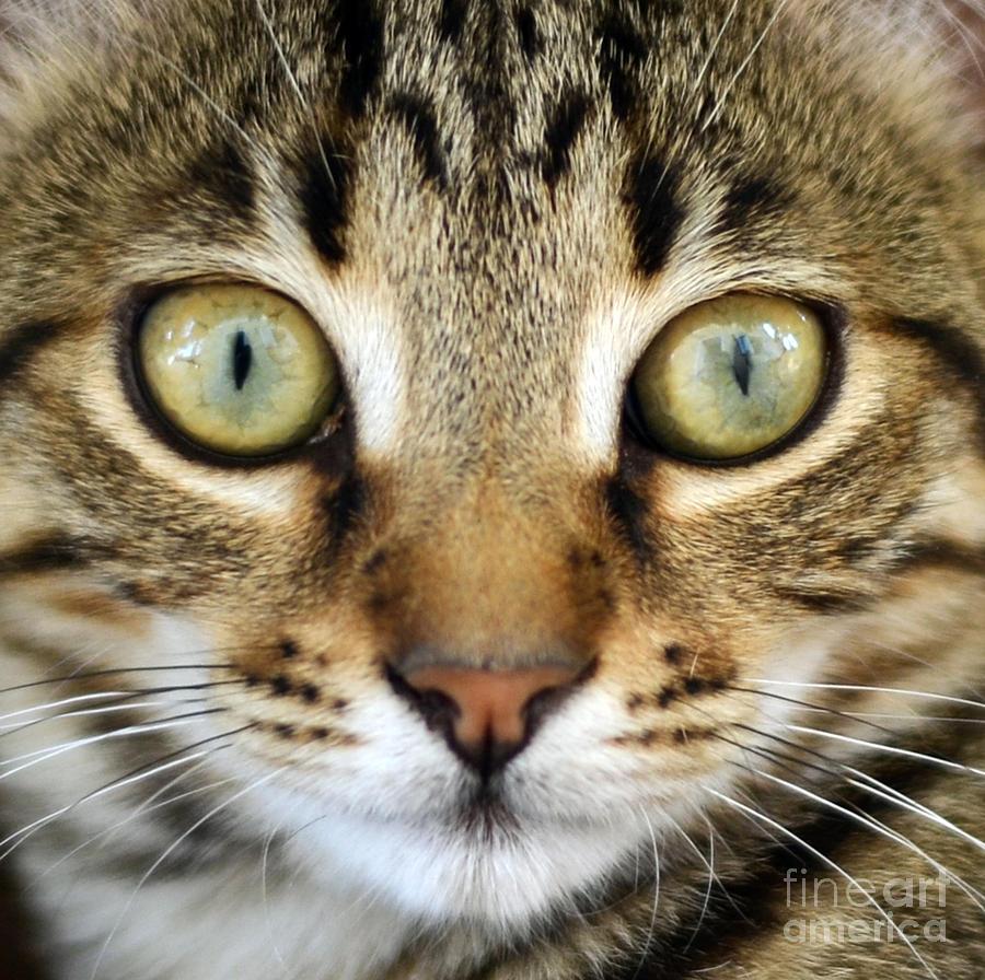 Cat Photograph - Cat Portrait Macro Shot by Aleksandar Mijatovic