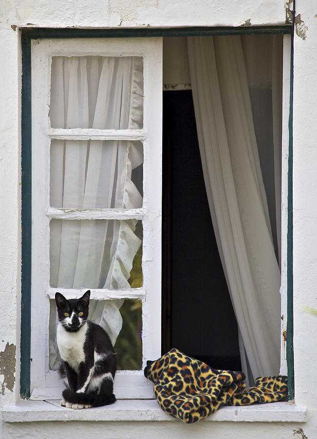 Animal Photograph - Cat Sitting On The Ledge Of An Open Wood Window by David Letts