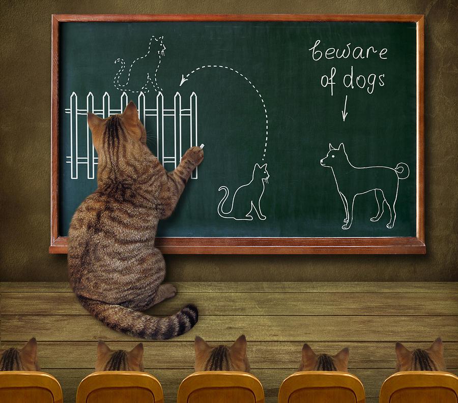 Humor Photograph - Cat Teacher And His Pupils... :) by Iryna Kuznetsova (iridi)