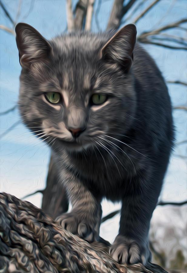 Cat Tree Photograph