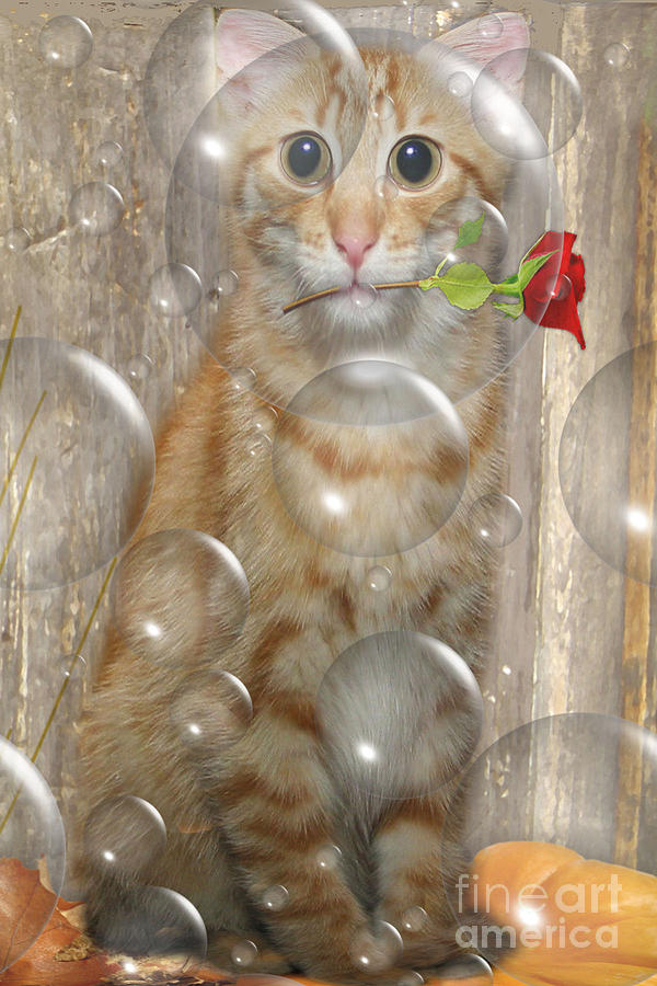 Animal Print Photograph - Cat With Bubbles by Jo Collins