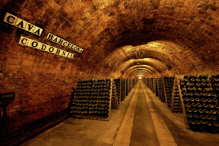 Catalonia Wine Region Cellars Photograph by Andrea Pistolesi