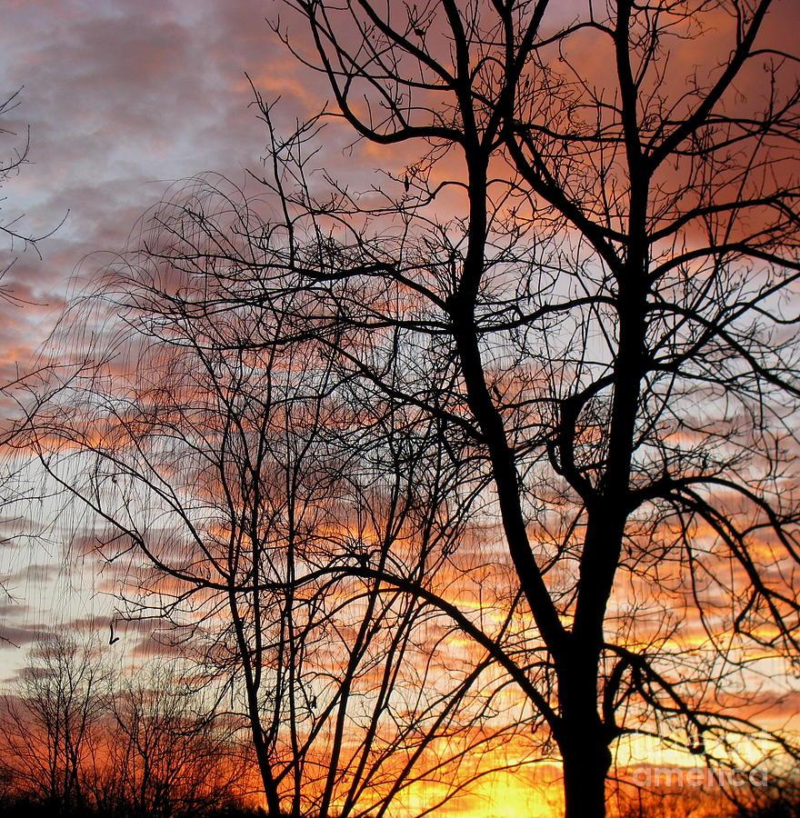 Sunrise Photograph - Catalpa by Fred  Sheridan