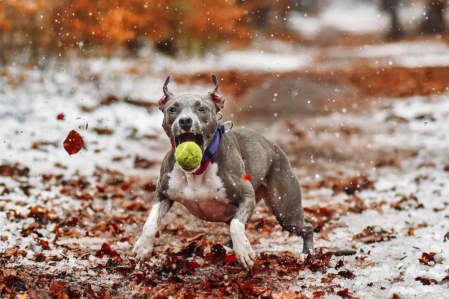 Animal Photograph - Catch The Ball. by Davorin Volav?ek