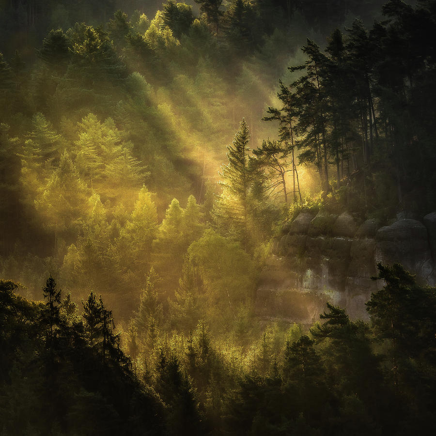 Autumn Photograph - Catching First Rays by Marek Boguszak