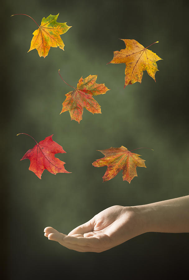 Hand Photograph - Catching Leaves by Amanda Elwell