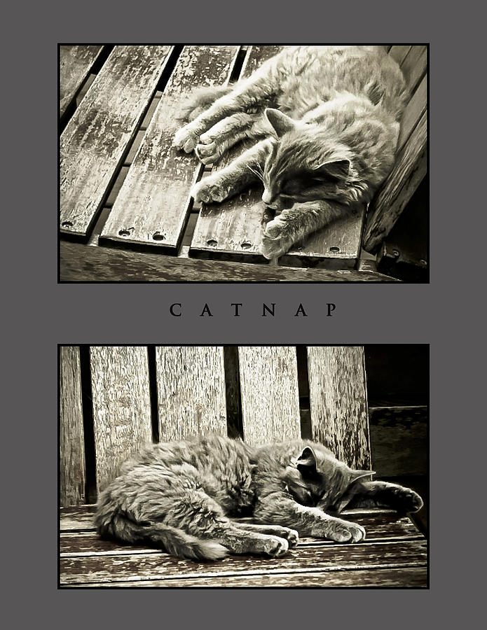 Catnap Photograph - Catnap by Greg Jackson
