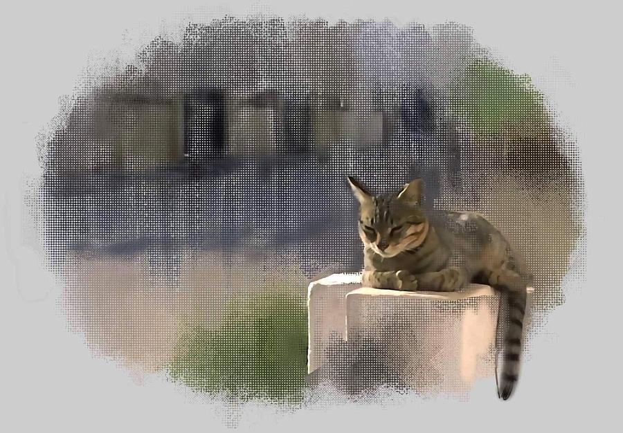 Catnap Digital Art - Catnap by Usha Shantharam