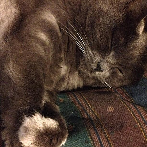 Cute Photograph - Catnap....good Night World:) #cat by Joann Vitali