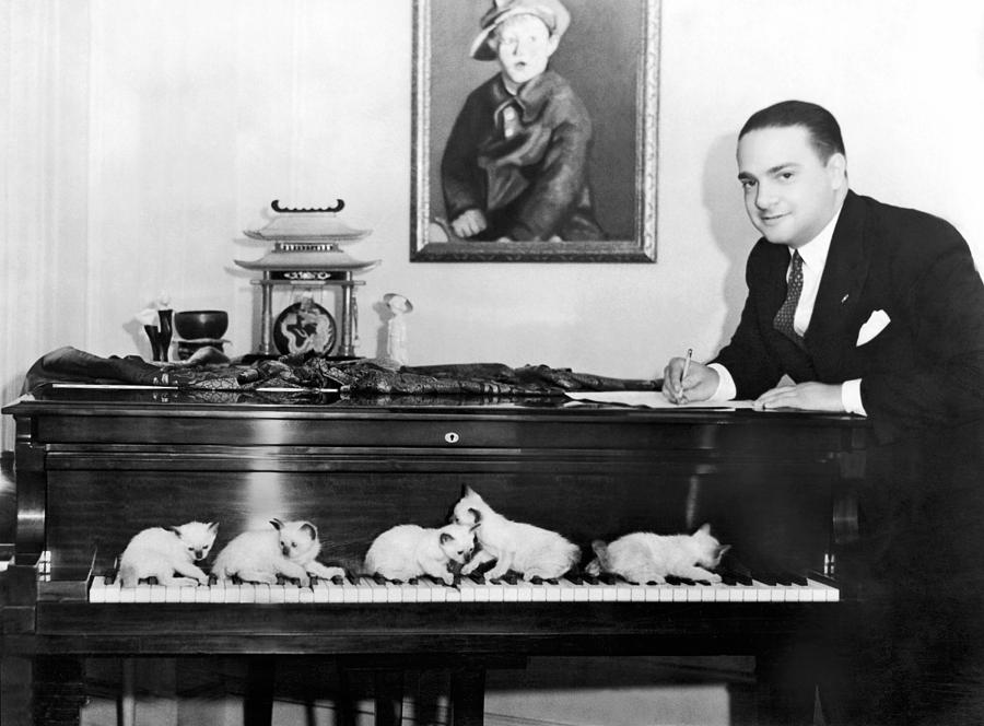 1920s Photograph - Cats Composing by Underwood Archives