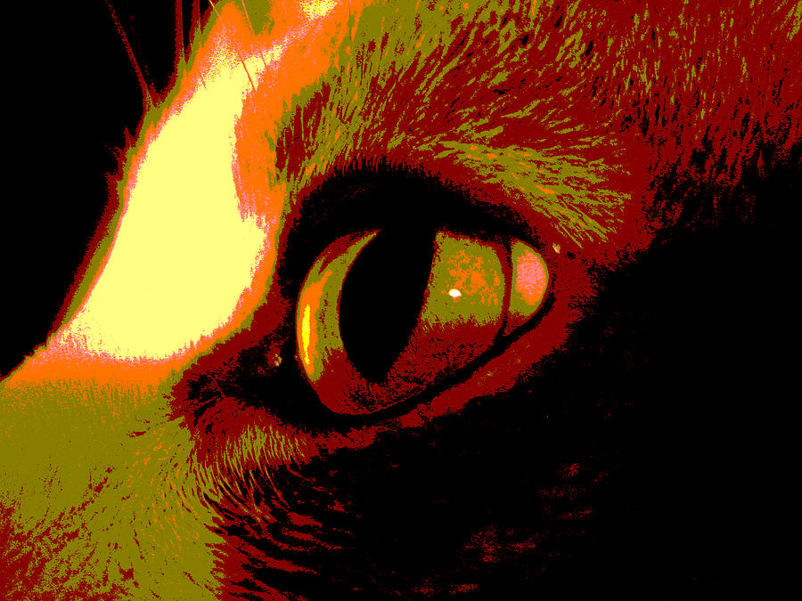 Cat Photograph - Cats Eye Abstract  by Ann Powell
