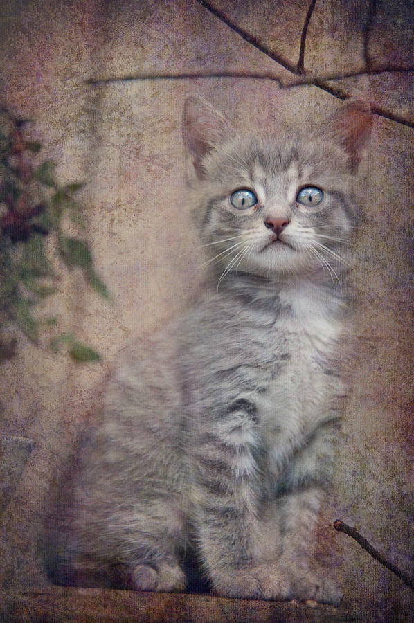 Photo Photograph - Cats Eyes #02 by Loriental Photography