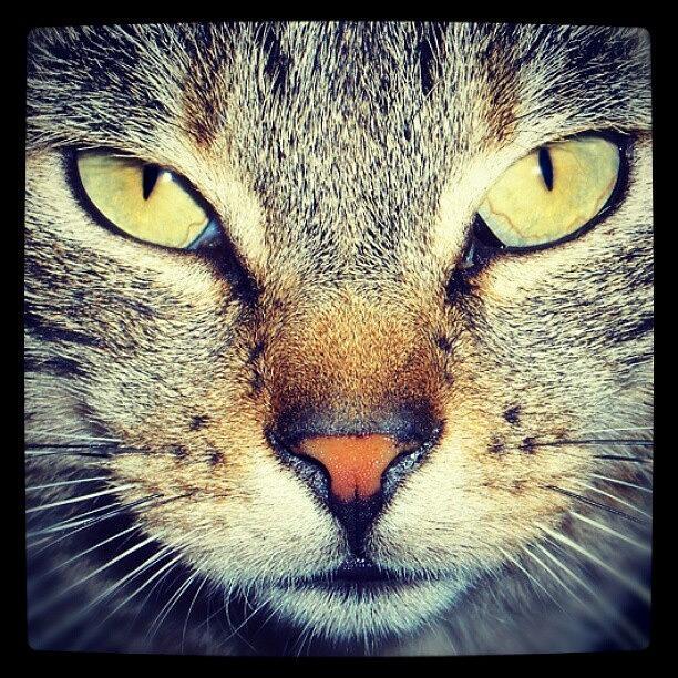 Life Photograph - Cats Eyes by Emanuela Carratoni