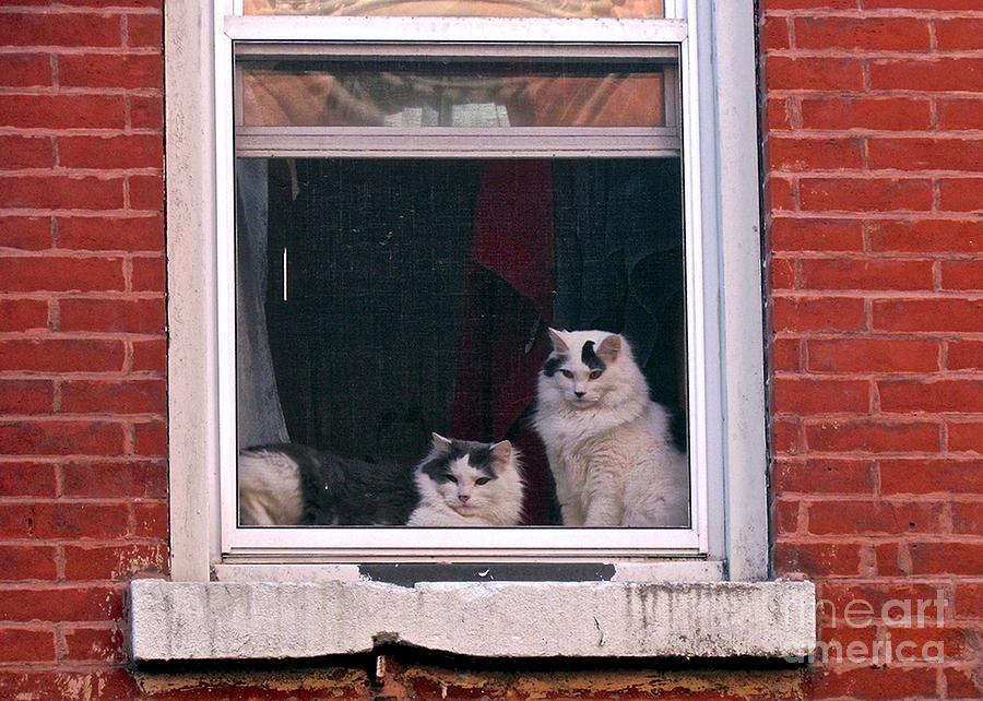 Cats Photograph - Cats On A Sill by Randi Shenkman