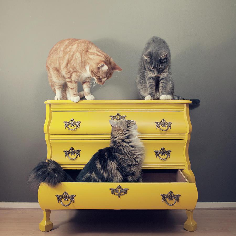 Cats Sitting On Cabinet Photograph by Paula Daniëlse