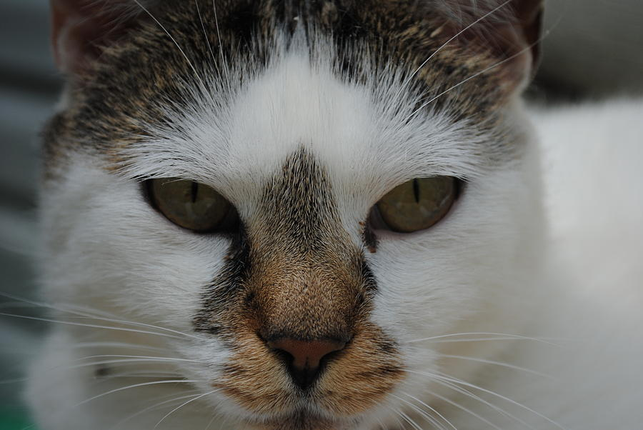 Cat Photograph - Cats Stare by Robert  Moss