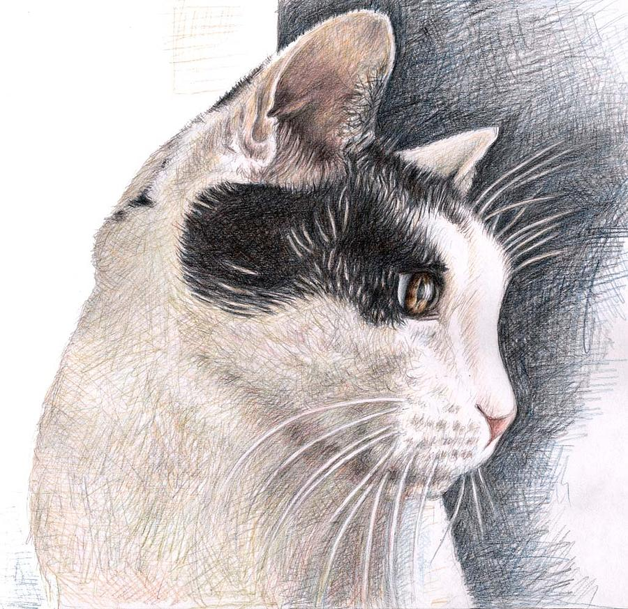 Cat Drawing - Cats View by Nicole Zeug
