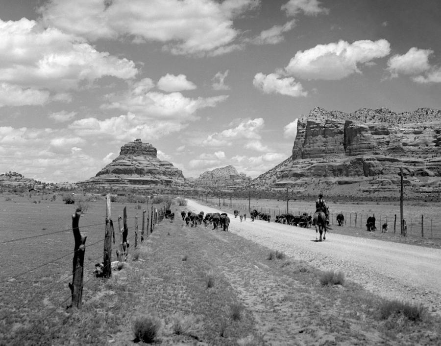 Arizona Photograph - Cattle Drive by Bob Bradshaw